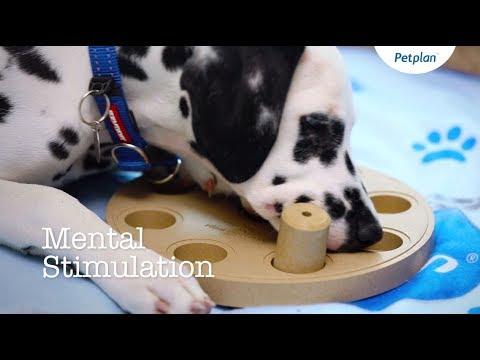 Puppy Training: Dog Tricks and Mental Stimulation | Petplan