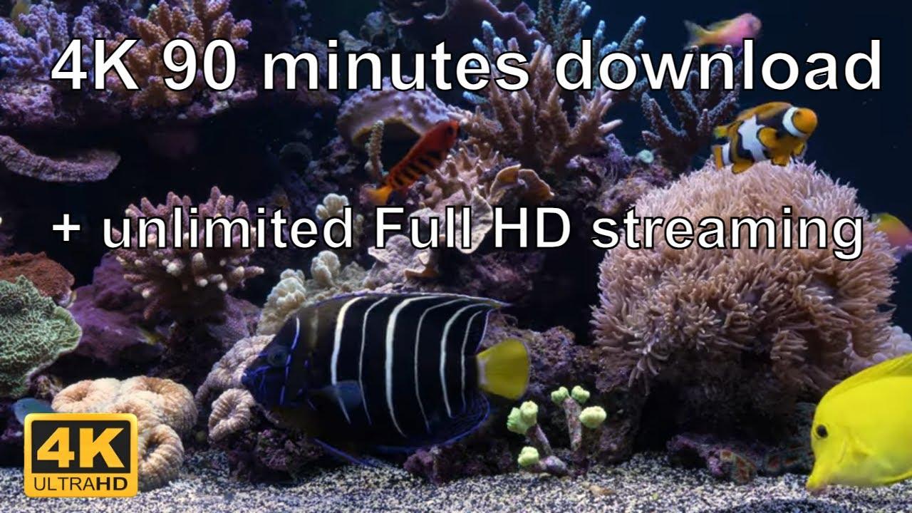 The Best 4k Aquarium Video Aquarium 4k Tv Screensaver Youtube