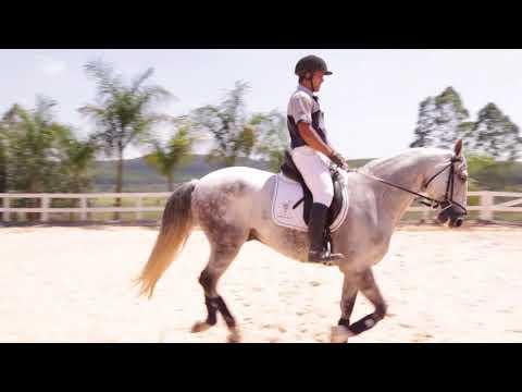Lote 06 Espigão DR Cavalos puro sangue Lusitanos - Coudelaria aguilar