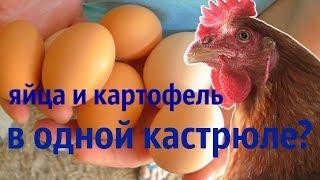 Можно ли варить яйца и картофель на салат в одной кастрюле одновременно?