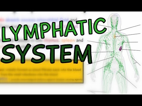 The Lymphatic System explained in 5 minutes - Lymph Vessels - Lymph Ducts - Lymph Nodes - Animation
