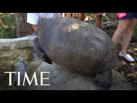 A Tortoise Species That Was Feared Extinct Was Found In The Galapagos | TIME