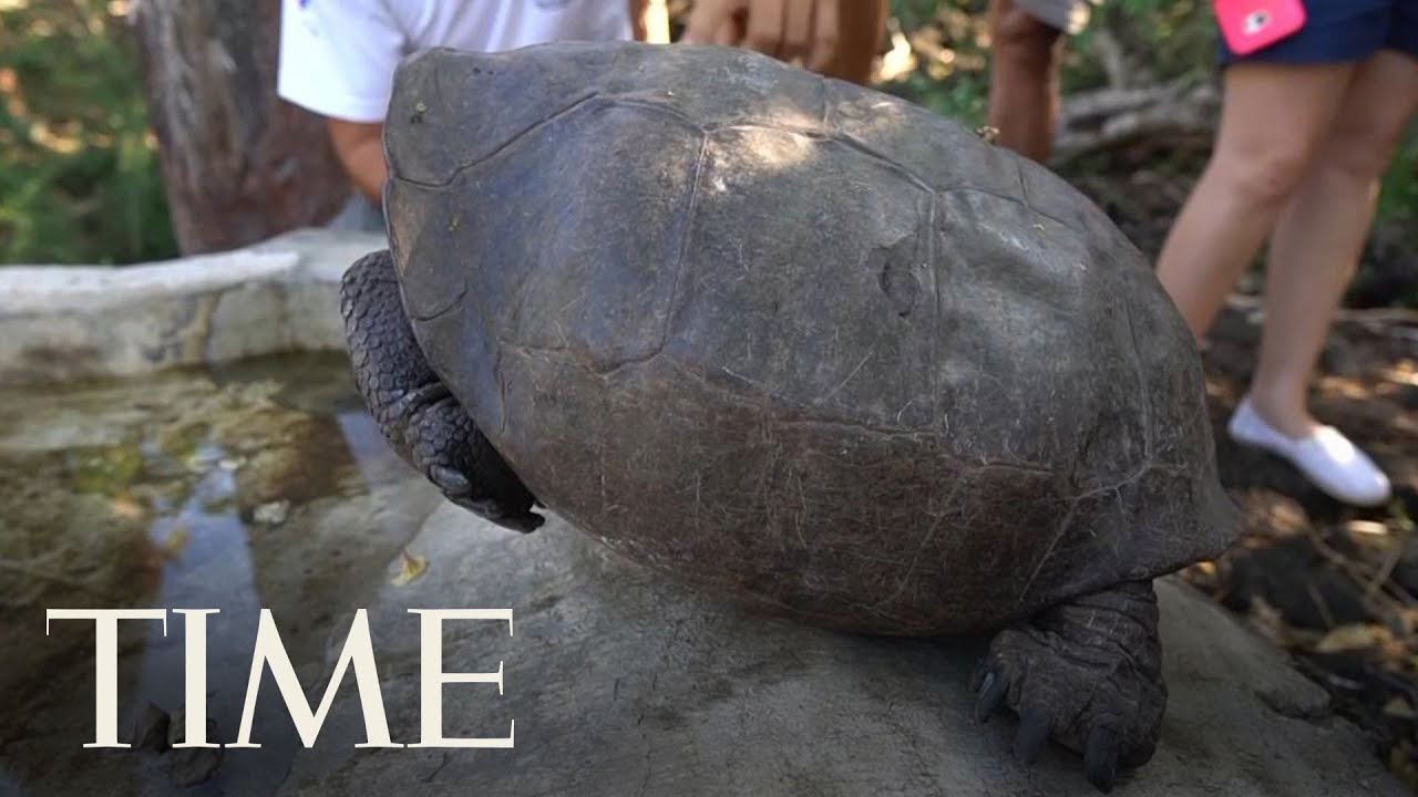 A Tortoise Species That Was Feared Extinct Was Found In The Galapagos   TIME