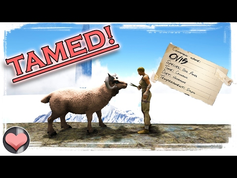 Learning the Hair Mechanic! Ovis Tame & Sheep Shearing :) - ARK: Survival Evolved - Patch 254