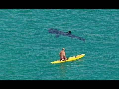 Shark Swims beneath Surfers  Drone Footage Compilation