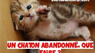 Un chaton 🐱 abandonné et recueilli, que faire ?