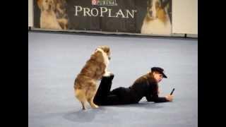 Freestyle Dog Dancing - Vanda Gregorova & All That Brandy Gentle Mate