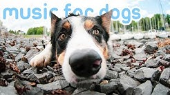 11 HOURS Deep Relaxation Dog Music! Reduce Anxiety and Stress in Dogs!