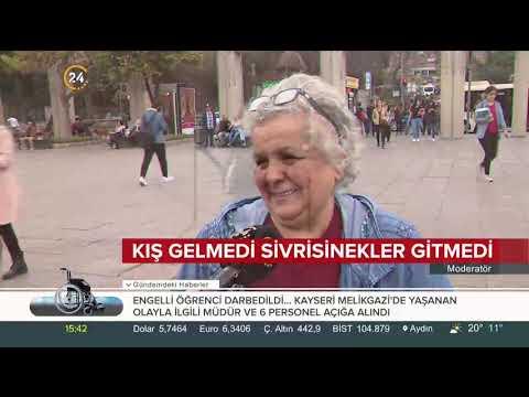 İstanbul'da Sinek Neden Arttı? Prof. Dr. Hüseyin Yılmaz 24 TV'de Cevapladı