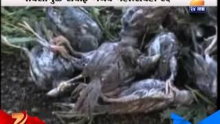 Video Maharashtra Affected Due To Climate Change download MP3, 3GP, MP4, WEBM, AVI, FLV Oktober 2018