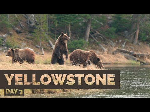 Springtime Wildlife Photography in Yellowstone - Day 3