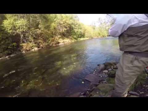 Russian River, Alaska Silver Coho Salmon.