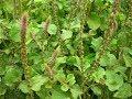 महिलाओं की हर बीमारी का इलाज है ये जादुई पौधा    Ayurved Samadhan   