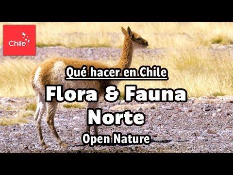 Qué hacer en Chile: Flora y Fauna Norte - Naturaleza Abierta