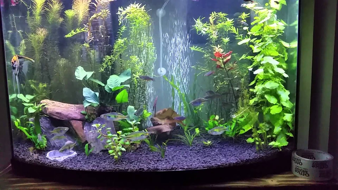 36 Gallon Bow Front Planted Tank Youtube