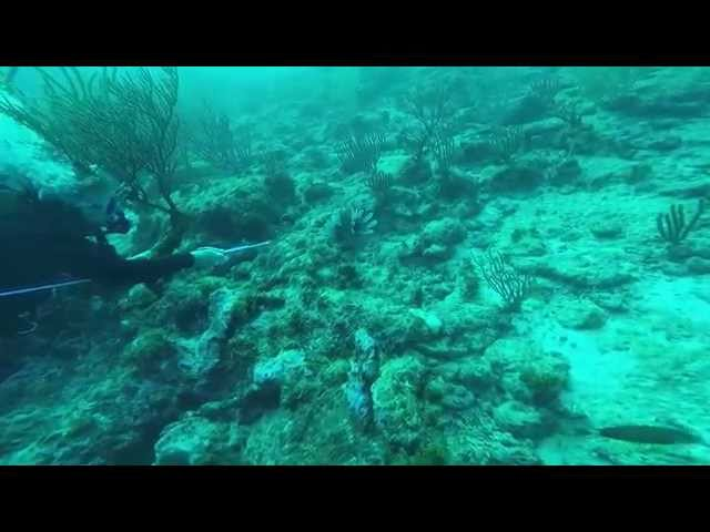 Spear Fishing for Venomous Lionfish in Aruba! Must see! #3