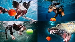 Жизнь собак / На что способны собаки (Discovery Channel)