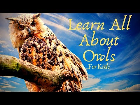 Learn All About Owls For Kids   Great For Preschool Children