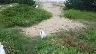 散歩を終えて戻ってくるのを堤防の上で待ってます.