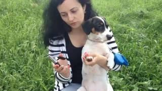 Как правильно обрезать ногти собаке(В этом ролике вы увидите как правильно обрезать ногти собаке. ----------------------------РОЗКРОЙ ОПИСАНИЕ-------------------------..., 2016-06-16T04:42:02.000Z)
