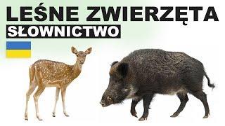 Польська для початківців - Лісові тварини 2 (Zwierzęta leśne)
