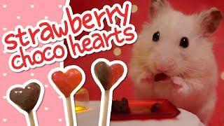 💘 Strawberry Choco Hearts | HAMSTER KITCHEN 💘
