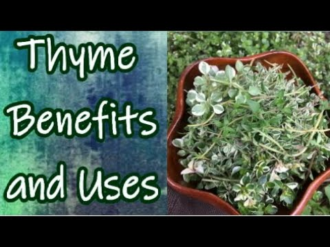 Benefits of Thyme