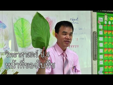 วิทยาศาสตร์ ป.4 หน้าที่ของใบพืช ครูเฉลิมชัย วัดเข้าหลาม