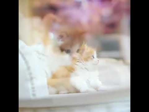 学猫叫-(xue-mao-jiao)-lirik-dan-terjemahan