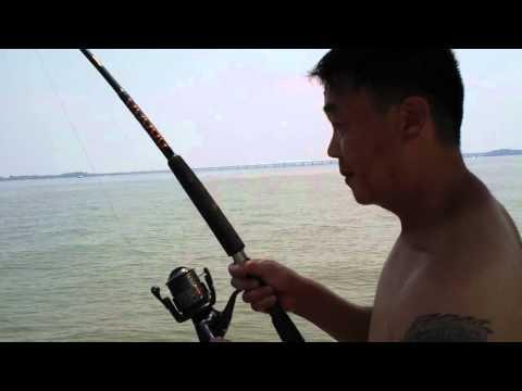 black drum fishing cambridge MD