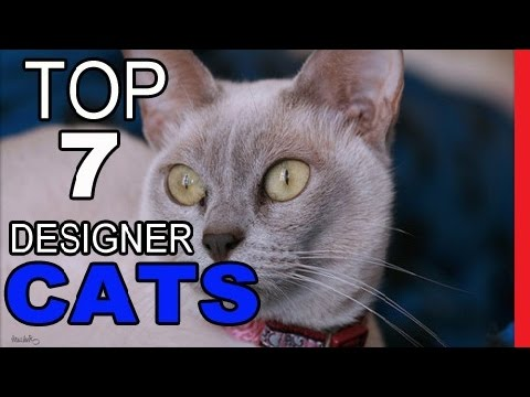 Top 7 Designer Cat Breeds