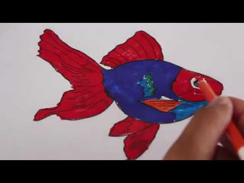How to Draw Coloring Book Fish Drawing with Colored Markers for Kids  # Page 09