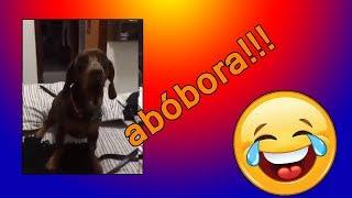 surpreendente cachorro aprende a falar abóbora!!!