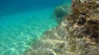 Pisak Croatia 2012 - Underwater videos (1)