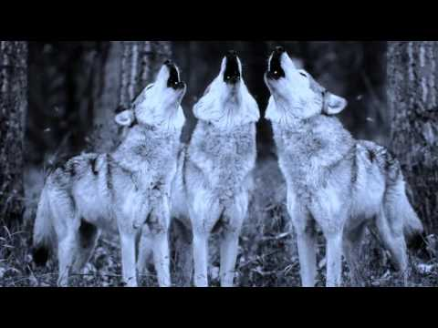 Dalac - Wolves