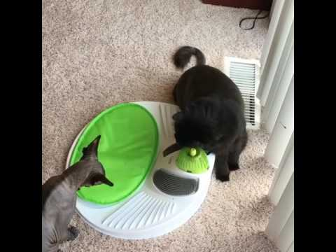Azzy and Bathory enjoying the Catit Senses 2.0 Wellness Center
