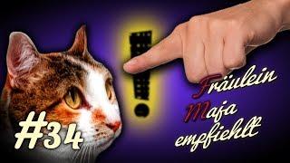 Katzenerziehung ☝️😺, How to - 👉Nicht alles durchgehen lassen! Katze erziehen, aber richtig #034