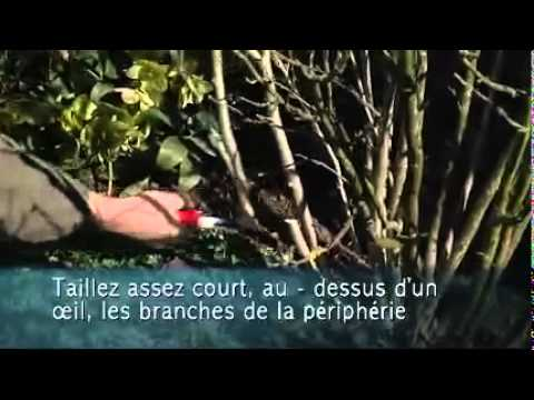 Tailler un hibiscus de jardin Colour Your Life - YouTube