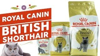 Сухой корм и консервы для Британских кошек и котят Royal Canin British Shorthair Adult & Kitten