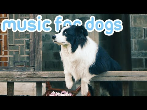 OVER 15 HOURS of Deep Separation Anxiety Music! Helped 10 Million Dogs!