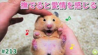 ハムスターは、撫でられると愛情を感じとってくれる動物です♪ thumbnail