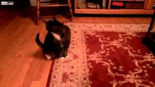 LASER POINTER CAT PRANK!