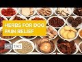 Drive Out Pain - Herbs for Dog Pain Relief