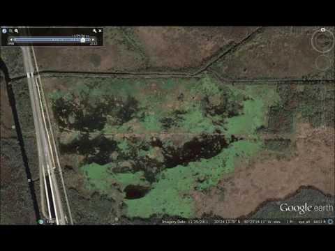 Nutrients Destroying Louisiana Marsh, Part II -Joyce WMA