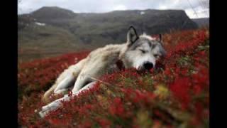 Foals - Spanish Sahara (Mount Kimbie Remix)