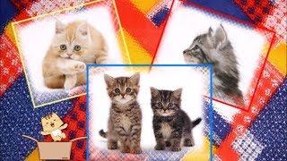 Видеоклип на песню о кошках и котятах - Кошки кошки
