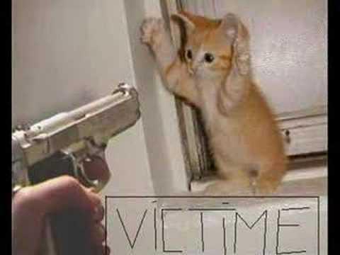 Bien connu drole de chat - YouTube LI38