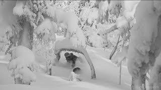 Живи Катаясь – Шерегеш | Snowboarding in Siberia [ENG sub.]