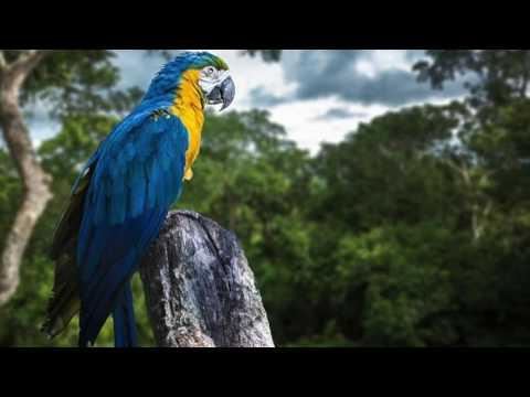 ET347 Rainforest Sounds