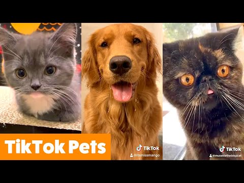 Silly TikTok Pet Reactions & Bloopers | Funny Pet Videos
